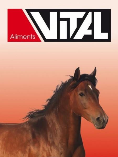 vital_chevaux 2