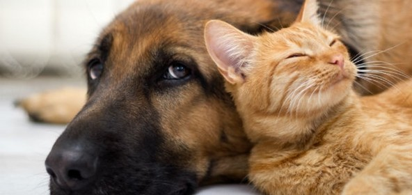 chien chat animal de compagnie